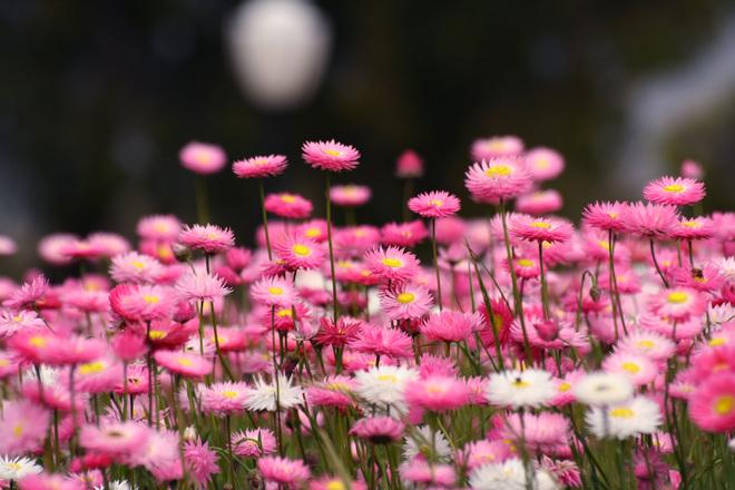 {Sew Heidi} It Will Spread Like Wildflowers